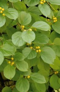 вьющиеся растения
