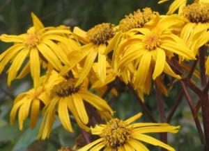 Растения для влажных солнечных мест