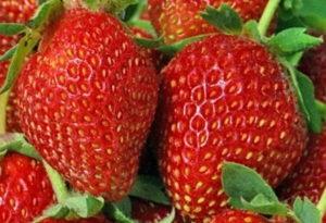продажа ягодных