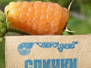 купить малину Оранжевое Чудо