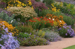 продажа садовых цветов