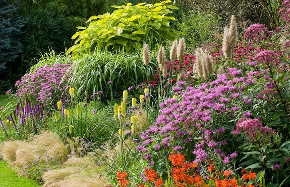 подбор растений для цветника